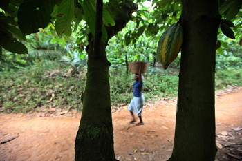 Cocoa farmers in Nigeria